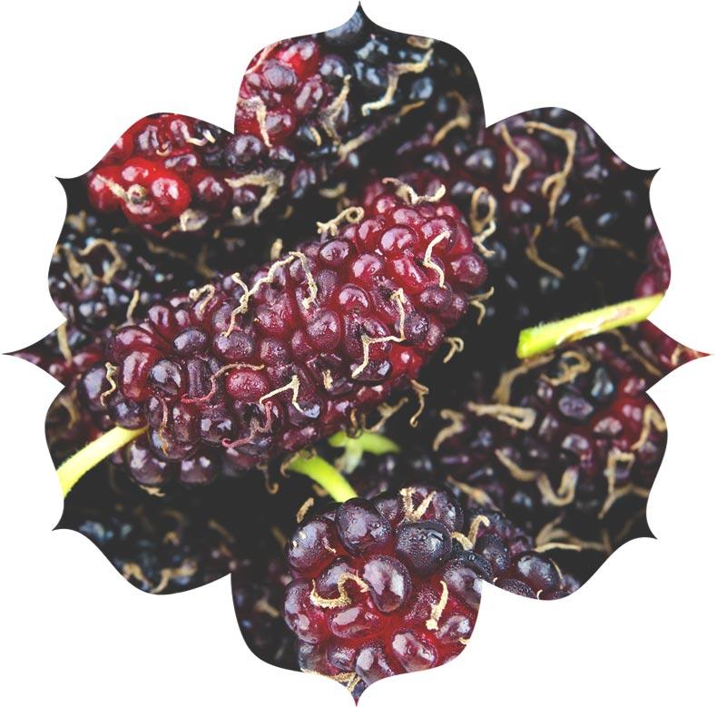 Black mulberry ingredient in skincare