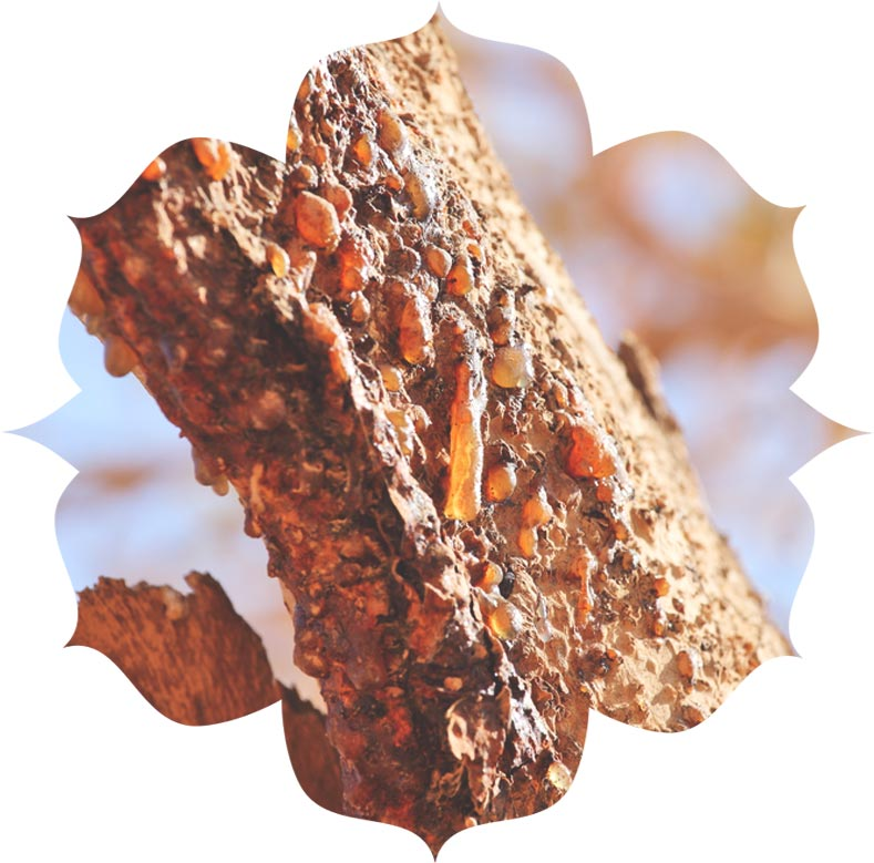 Myrrh ingredient in skincare