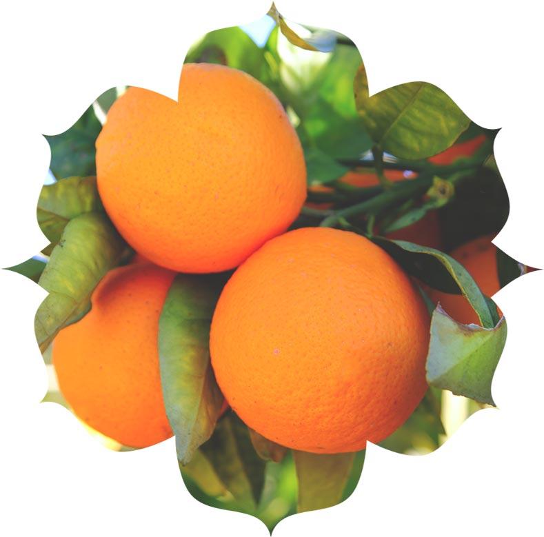 Orange ingredient in urban veda skincare
