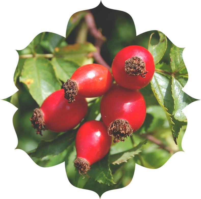 Rosehip fruit oil ingredient in skincare