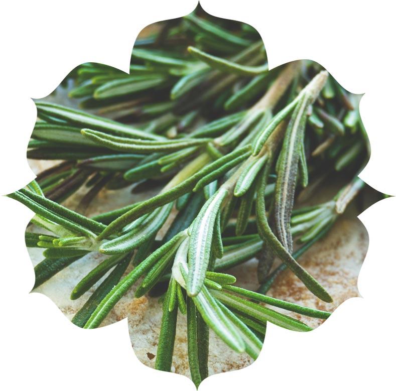 Rosemary ingredient in skincare